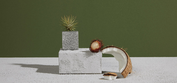 coconut shell, lychee and aloe resting on rough surfaces